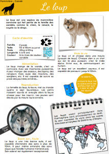 [Documentaire - pdf] Le loup
