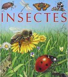 les-insectes