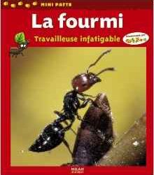 la-fourmi