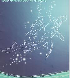baleineabosse